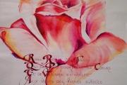 rose-callig